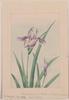 Flower 59 Image