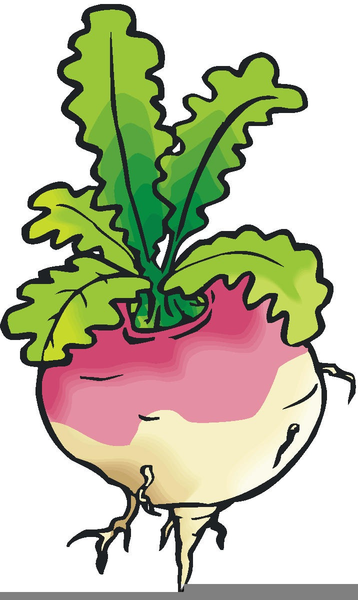 enormous turnip clipart free images at clker com vector clip art rh clker com tulip outline clip art turnip greens clipart