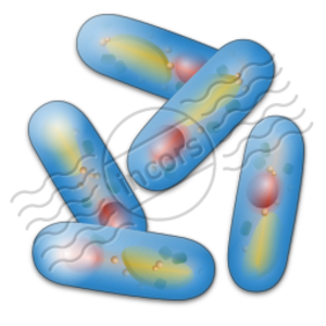 Bacteria 12 Image