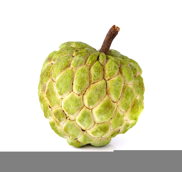 Picture Of Atis Clipart Free Images At Clker Com