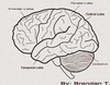 Side Brain Image