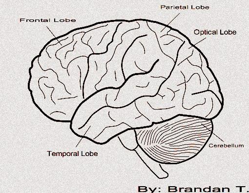 Side Brain   Free Images at Clker.com - vector clip art ...