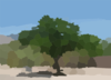 A Mesquite Tree In The Binghampton Cemetery Clip Art