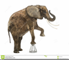 African Elephant Clipart Image