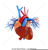 Free Clipart Heart Anatomy Image