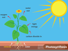 Clipart Photosynthesis Image