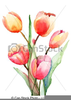 Oil Painting Clipart Free Image