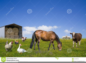 Free Clipart Of Animals On A Farm Image
