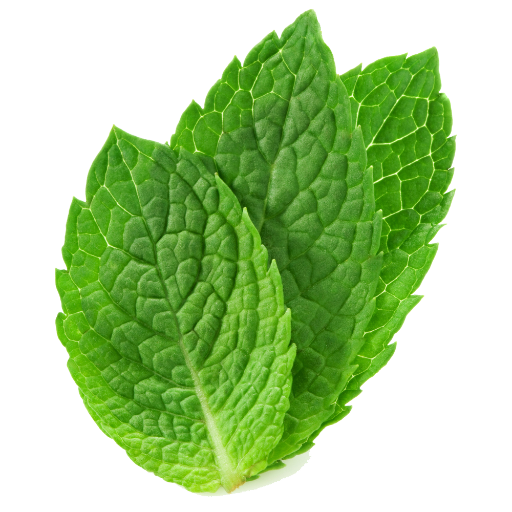 fresh mint leaves free images at clker com vector clip art
