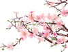 Orange Blossoms Clipart Image