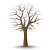 Tree Branches Clipart Image