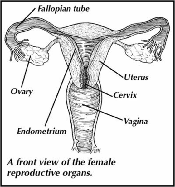 reproductive system definition from answers