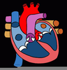 Clipart Human Heart Image