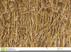 Wheat Straw Clipart Image