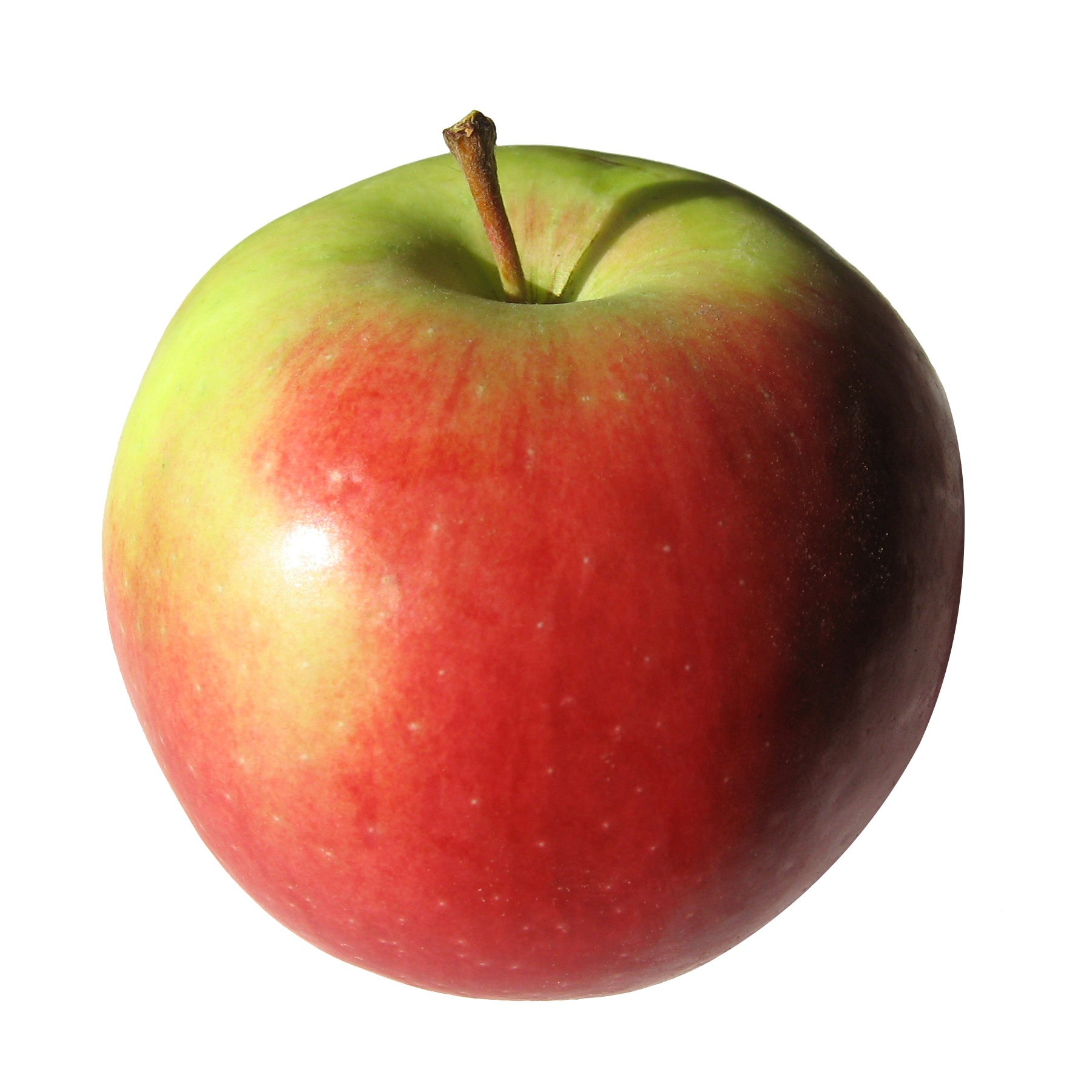 Apple | Free Images at Clker.com - vector clip art online ...