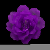 Purple Camellia Flower Image