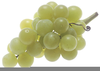 Green Grapes Clipart Image