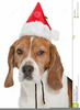 Free Christmas Pet Clipart Image