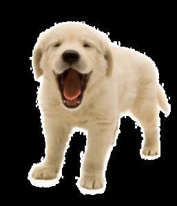 A Smiling Dog   Free Images at Clker.com - vector clip art ...