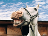Laughing Horse X Image