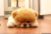 Cute Fluffy Dog Image