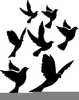 Free Dove Clipart Black And White Image