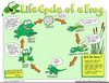 Free Clipart Of Frog Life Cycle Image