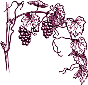 Maroon Grape Vine Clip Art
