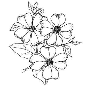 Free Clipart Drawings Of Flowers Image