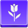 Free Violet Button Tulip Image