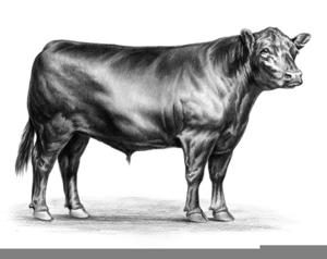 Something Angus bull clip art valuable