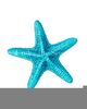 Orange Starfish Clipart Image