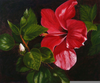 Hibiscus Acrylic Painting Image
