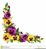 Pansy Clipart Image