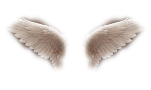 Wings Image