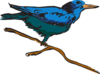Blue Perched Bird Art Clip Art