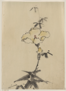 [yellow Blossom With Bud On A Stalk Above Leaves] Image