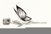 Butterfly Flying Drawings Image