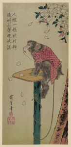 Monkey On A Leash And Cherry Blossoms. Image