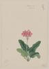 Sakura So Image
