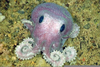 Cute Octopus Pictures Image