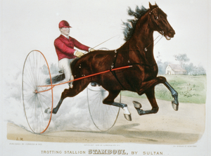 Trotting Stallion Stamboul, By Sultan: Record 2:12 1/4 Image