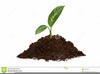 Pile Of Dirt Clipart Image
