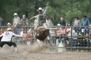 Rodeo Bull Riding Image