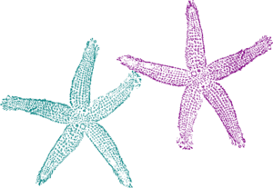Starfish Teal And Purple Clip Art
