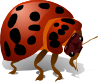 The wonderful little lady bug has a ravenous appetite and will help clean up cat flea pests in your yard! - Natural Flea Treatment Cats