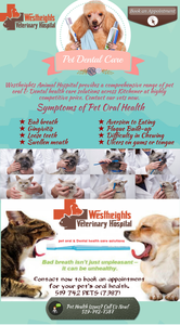 Pet Dental Care Emergency Pet Hospital Kitchener Image