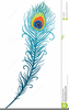 Peacock Feather Illustration Clipart Image