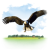 Animals Eagle Icon Image