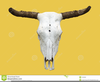 Cow Skull Clipart Image